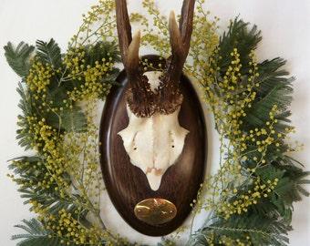 Vintage Roe Deer Antler Mount, Poland 1993