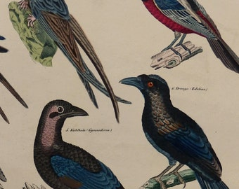 "OKEN.1843.Antique Large print."".BIRDS,swallows ,martins,broadbills,..174 years old.Lithograph colored by hand.13.3x10.5"",or 34x27cm."