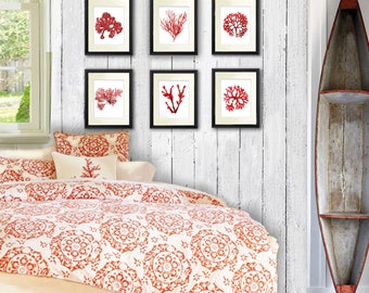 Coastal Wall Decor, Coral Red Seaweed Art Prints set of 6 beach bedroom decor beach bathroom art  Gnosis PictureArchive