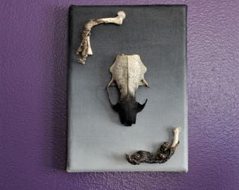 Ombre Mink Skull Canvas