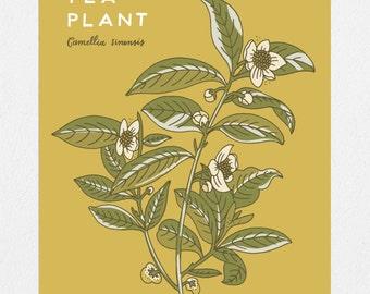 Tea Plant Botanical 11 x 14 Screen Print