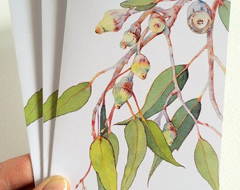 Set of 3 cards and envelopes: Eucalyptus tree - blank cards with envelopes for any occasion - card made in Australia, from Australian seller