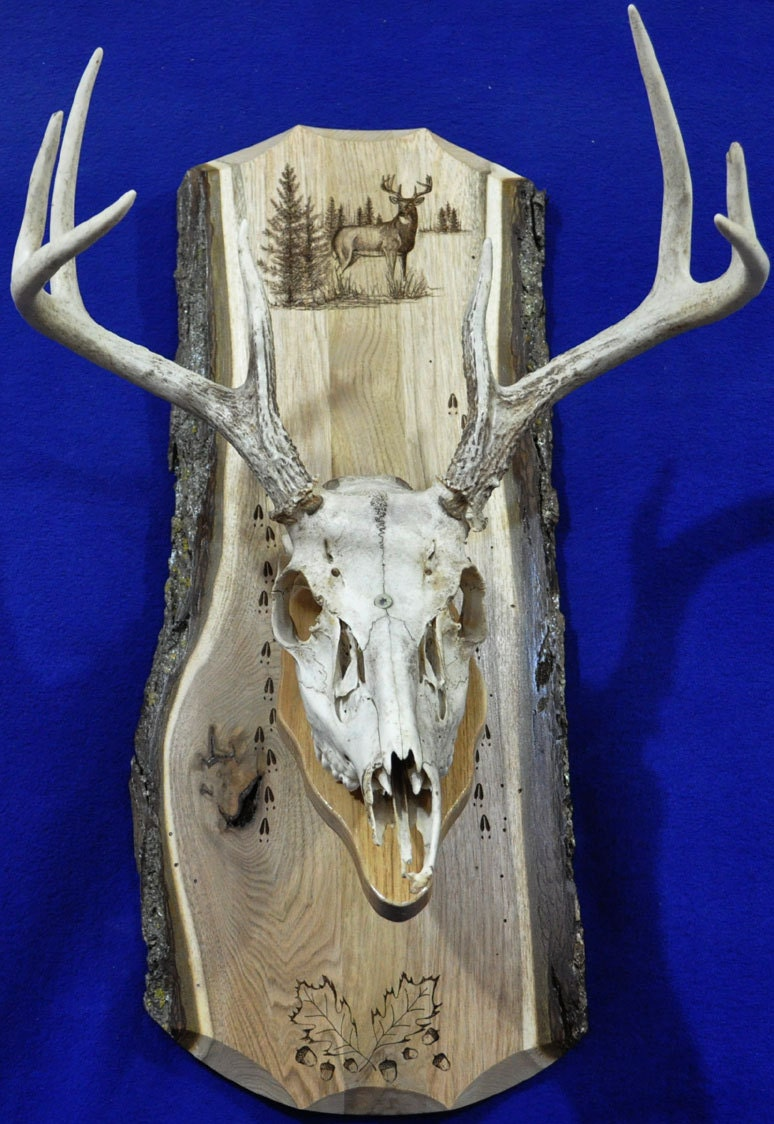 Deer skull mount ideas - Details Deer Hunting European Mount Plaque
