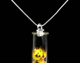 Live Succulent Necklace / Terrarium Necklace / Miniature Terrarium / Keychain Plants / Tiny Terrarium