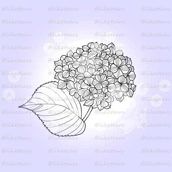 digital stamp digistamp digi line art adult coloring page instant download printable cards crafts png jpg floral flower hydrangea 001 from liketears on