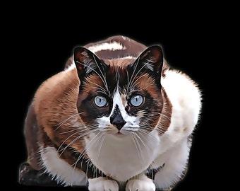 Pet portrait. Cat portrait. Custom Cat portrait. Custom pet portrait. Cat loss gift. Personalized pet portrait. Pet memorial. Pet gift art