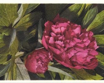 Vintage Botanical Postcard, Unused 1940s, Paeony, Thor E. Gyger, Switzerland  #804
