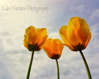 Trio of Spring Tulips (Original Photo)