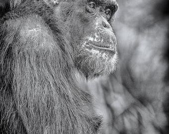 Monkey Fine Art Photograph