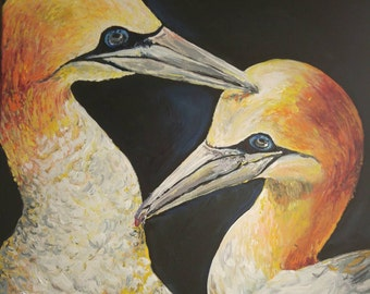 Gannet gathering