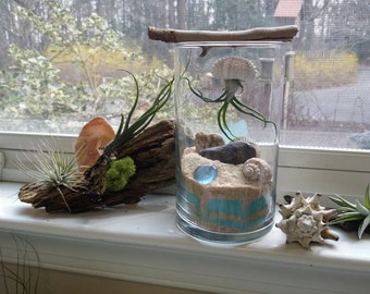 Air Plant Jellyfish Terrarium | Tillandsia | Beach Decor | Air Plant Gift | Airplant | Air Plant Sea Urchin | Air Plant Jelly Fish