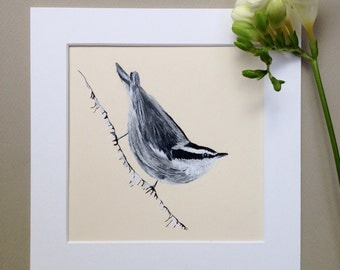 Nuthatch, Original Bird Art