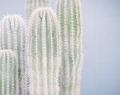 Cactus Print, Saguaro Print, Saguaro Cactus Photo, Minimal Cactus Print, Cactus Photography, Cactus Art, Minimalist Decor