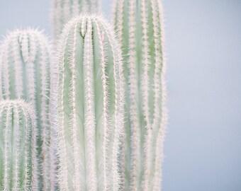 Cactus Print No. 17