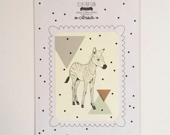 Framed illustration of little Zebra