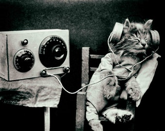 Vintage photo print poster kitten cat art antique photograph old radio headphones music anthropomorphic 1920s gift cat lover
