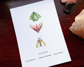 Burren Flora Series: Native Moths A6 Illustration Print