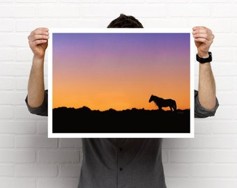 Beautiful wild horse poster-Band Stallion 'Prince' late one evening standing watch-Wild horse poster