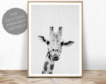 Giraffe Print, Safari Nursery Wall Art Decor, Large Printable Kids Room Poster, Digital Download, Giraffe Photo, Baby Shower