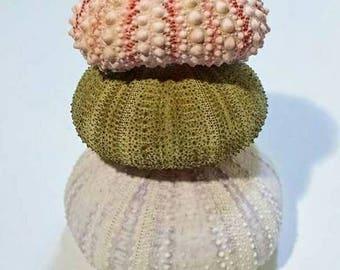 Sea Urchin Shell Set of 3, pink urchin, green urchin, purple urchin, beach decor, air plant holder, shell planter, beach wedding
