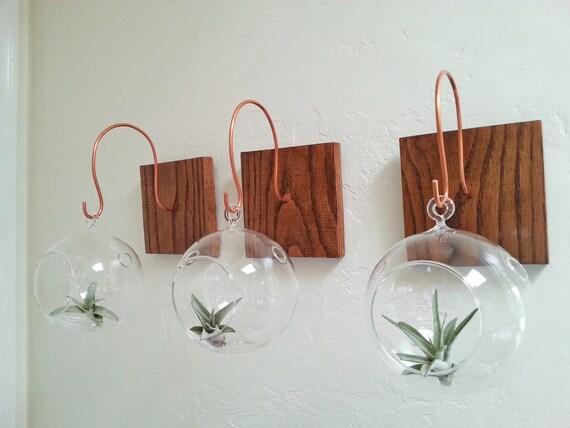 Hang your terrarium wall mount for hanging terrarium for Indoor plant gift ideas