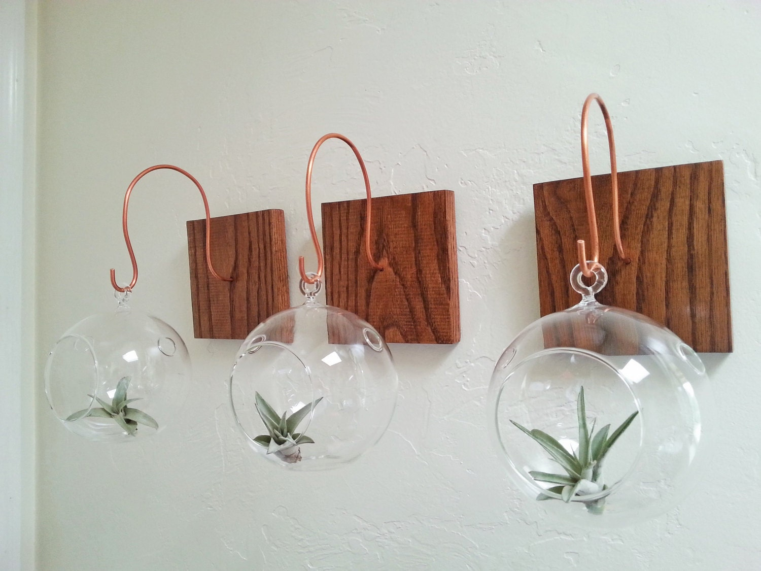 Hang your terrarium wall mount for hanging terrarium for Air plant holder ideas