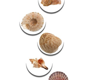 A pack of 5 seaside shells Pattern weights Ideal for weighing down patterns on delicate fabrics no need for pins TV sewing Bee