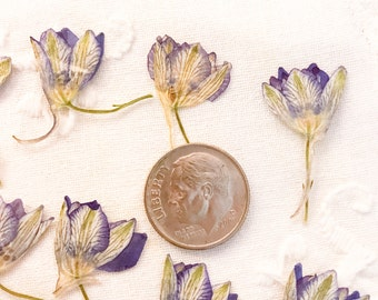 Small Flowers Larkspur;Delphinium;Purple Flowers 20 Real flowers;Pressed Flowers;Dried Flowers;Dried Botanicals;Flower Art;Flowers