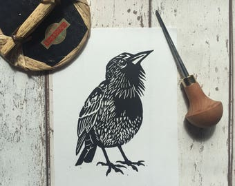Starling bird linocut print - hand-pulled, limited edition