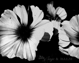 Black & White floral, black and white flower, moody, floral photography print, dreamy, romantic, dramatic, wall-art, photo-print