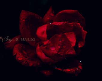 Moody dark red rose floral photography, rain drops, water drops, romantic, mother's day, anniversary, bridal, wedding, valentine's day, gift
