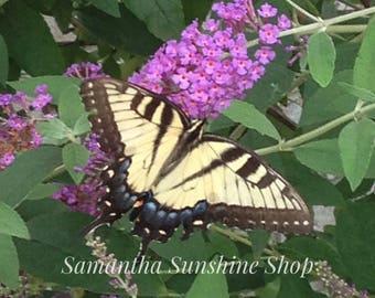 Original Fine Art Photography Yellow Butterfly Photo Swallowtail Butterfly Nature Photo Wall Decor Home Decor Housewarming Birthday Gift