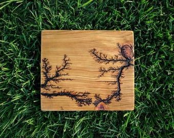 Electric Art - Creations of Nature