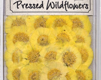 Desert Marigold 20 Wildflowers Sale
