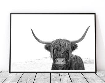 Highland Cow Print, Large Wall Art, Animal Photography Print, Black and White Art Print, Best Selling Art, Cow Art, Buffalo Print, Bison