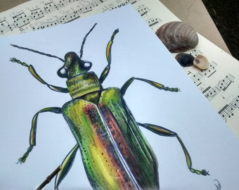 Original A4 Leaf Beetle Drawing