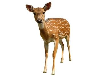 MIT Bambi Deer Fawn Animal Overlay