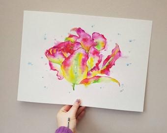 Parrot Tulip original watercolour painting A3.