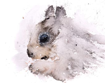 Grey Squirrel No.2 - Signed limited Edition Print of my Original Water Colour Painting of a Grey Squirrel