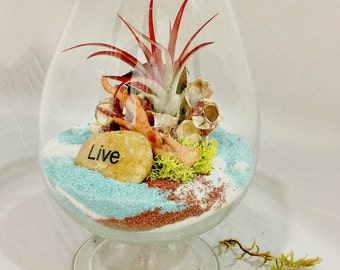 Tillandsia Terrarium Air Plant Glass Air-Plant Gift Bromeliad Fireball, A Perfect Christmas Gift!