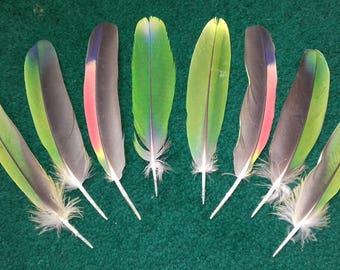 Amazon molt feathers. Set of 8 feathers. Cruelty Free