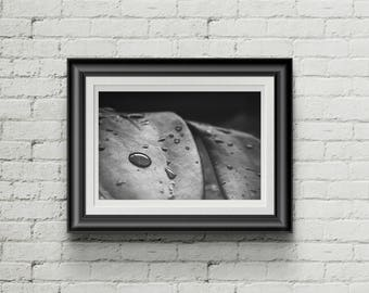 Instant Download Black and White Print, Water Droplet, Nature, Photography
