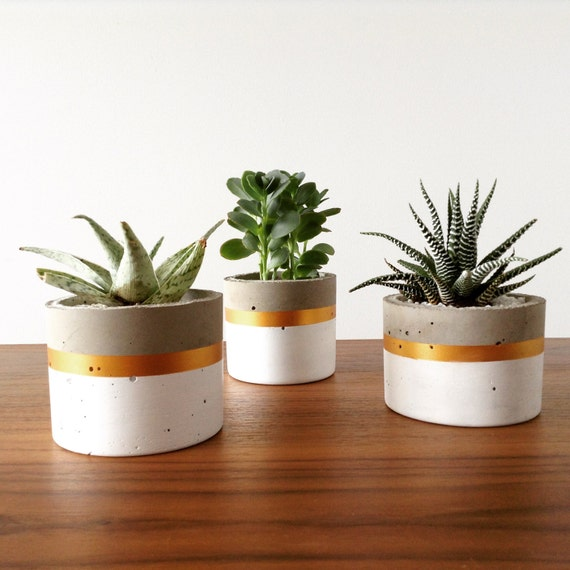 cylinder concrete planter pot for succulents and cacti