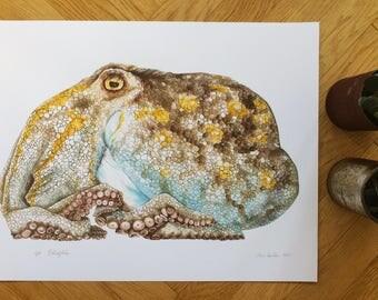 Octopus - Watercolour Reproduction