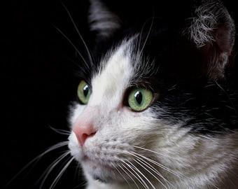 Cody's surprise - Cat Photo - Animal Photograph - Cat Print - Cat Art - Italian Cat - Close-up