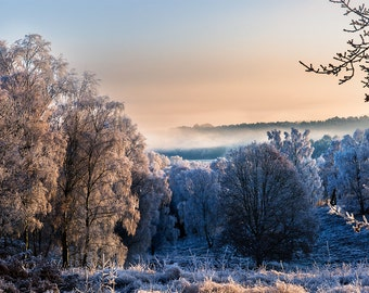 Landscape Photography Print- Snowy Path - Cannock Chase, Staffordshire