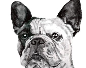 Fine Art Print - French Bulldog