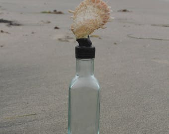 Unique Shell Bottle