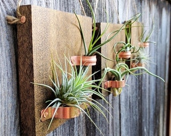 Set of Three Hanging Wood Plaques with Copper Holders and Six Air Plants