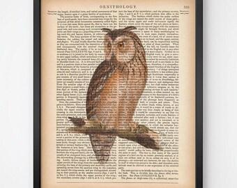 Antique dictionary print, Owl print, Vintage bird print, Bird art print, Digital dictionary print, Printable wall art, 8x10 art, 11x14 art